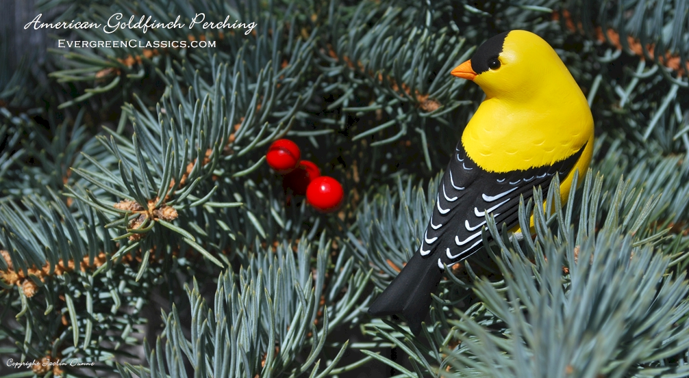 American Goldfinch perching ornament on a Blue Spruce evergreen tree.