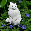 White cat among the blue Veronica flowers.